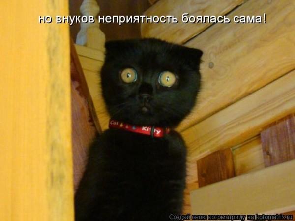 Фотографии кошек - Страница 2 I-14805