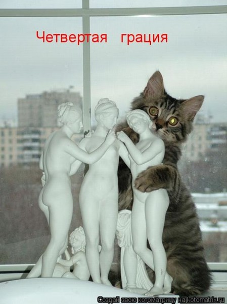 Фотографии кошек - Страница 2 I-14806