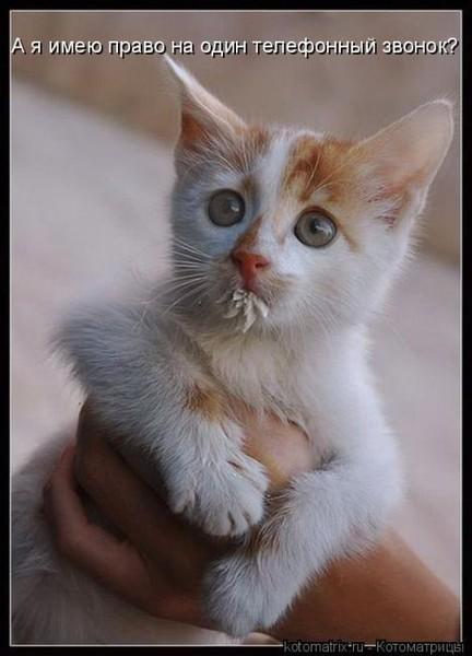 Фотографии кошек - Страница 2 I-14807