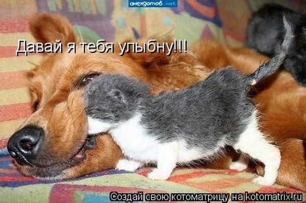 Фотографии кошек - Страница 2 I-14808
