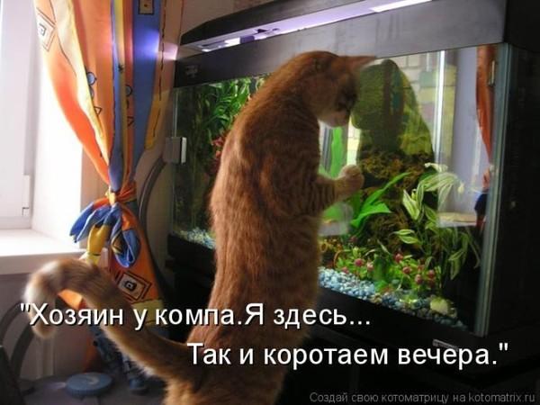 Фотографии кошек - Страница 2 I-14811