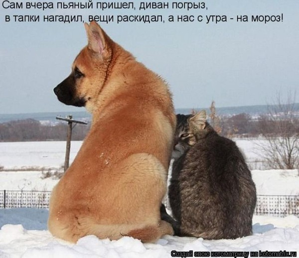 Фотографии кошек - Страница 2 I-14812
