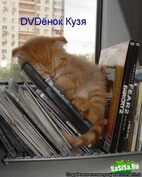 Фотографии кошек - Страница 2 I-14814