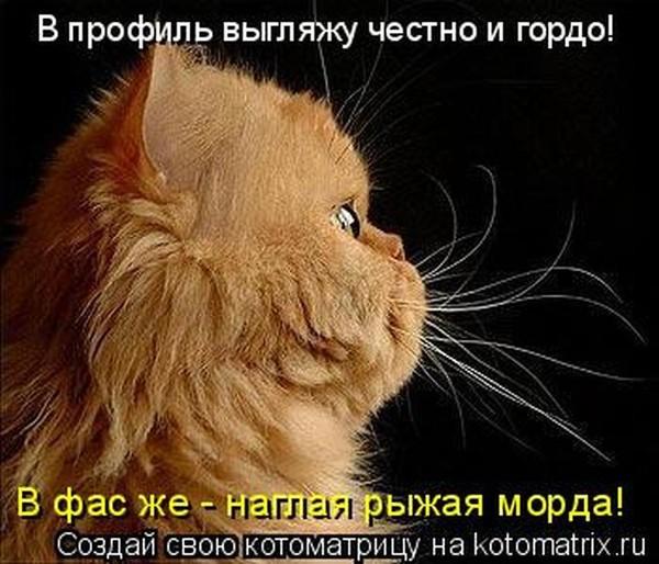 Фотографии кошек - Страница 2 I-14815