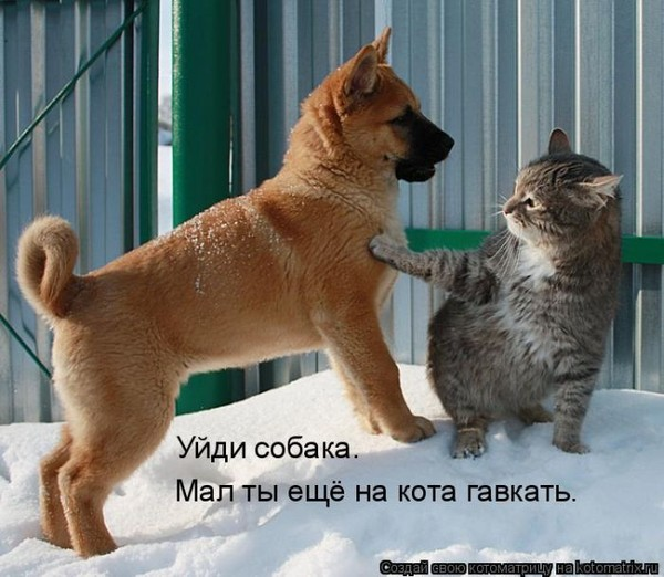 Фотографии кошек - Страница 2 I-14817