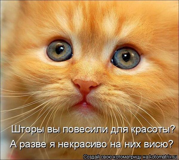 Фотографии кошек - Страница 2 I-14818