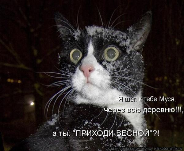 Фотографии кошек - Страница 2 I-14820