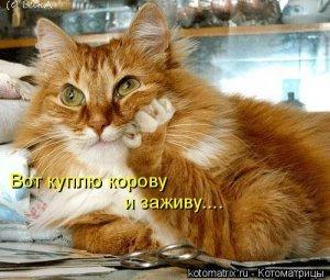 Фотографии кошек - Страница 2 I-14821