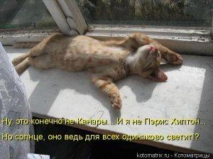 Фотографии кошек - Страница 2 I-14822