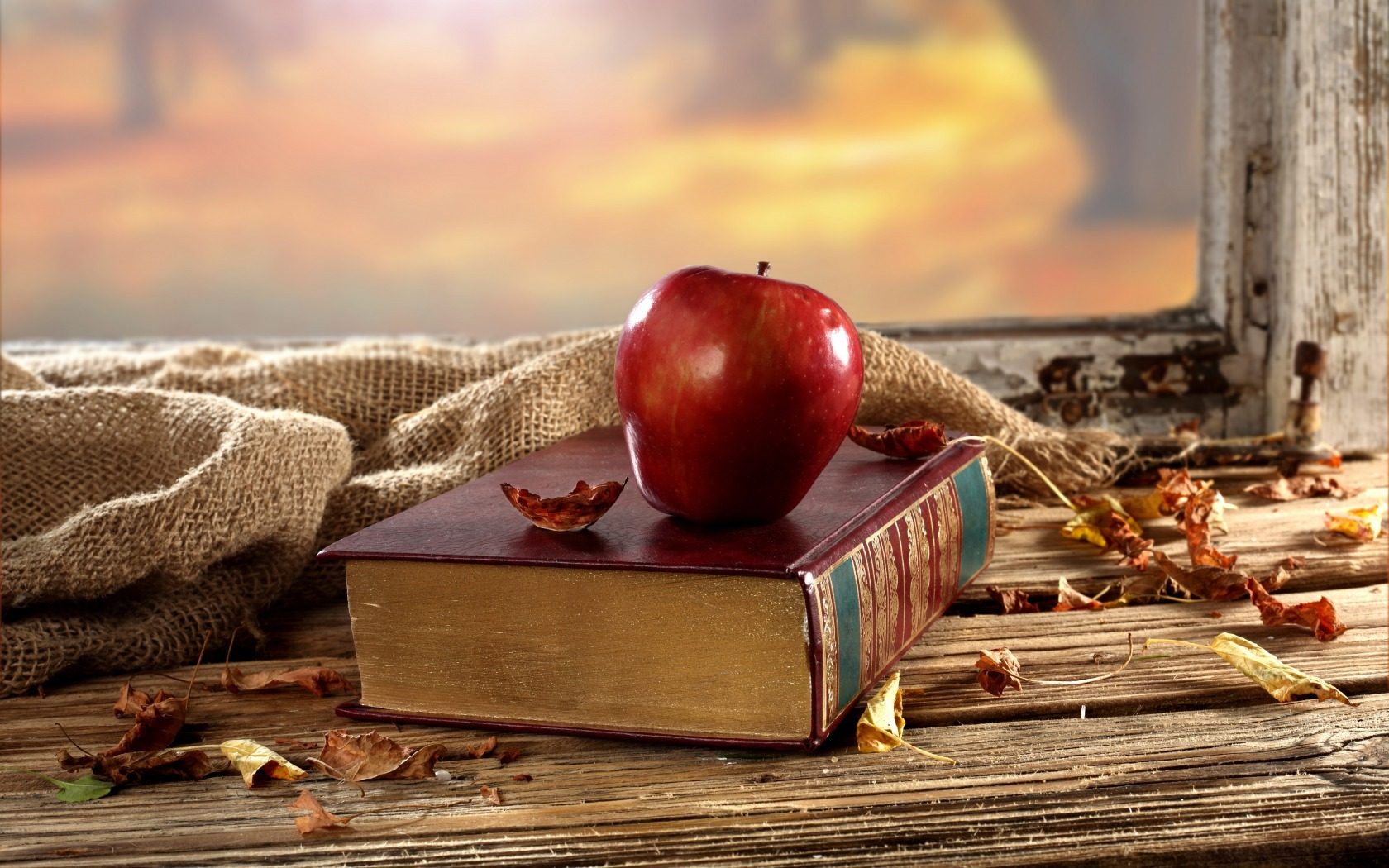 ... Y caen las hojas, llega ....¡¡¡ EL Otoño !!! - Página 4 H-58539