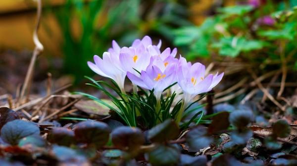 цветы - Весенние цветы I-434