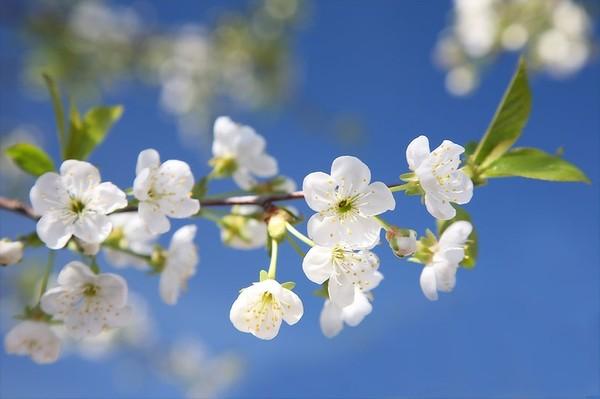 цветы - Весенние цветы I-435