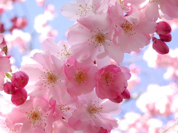 цветы - Весенние цветы I-437