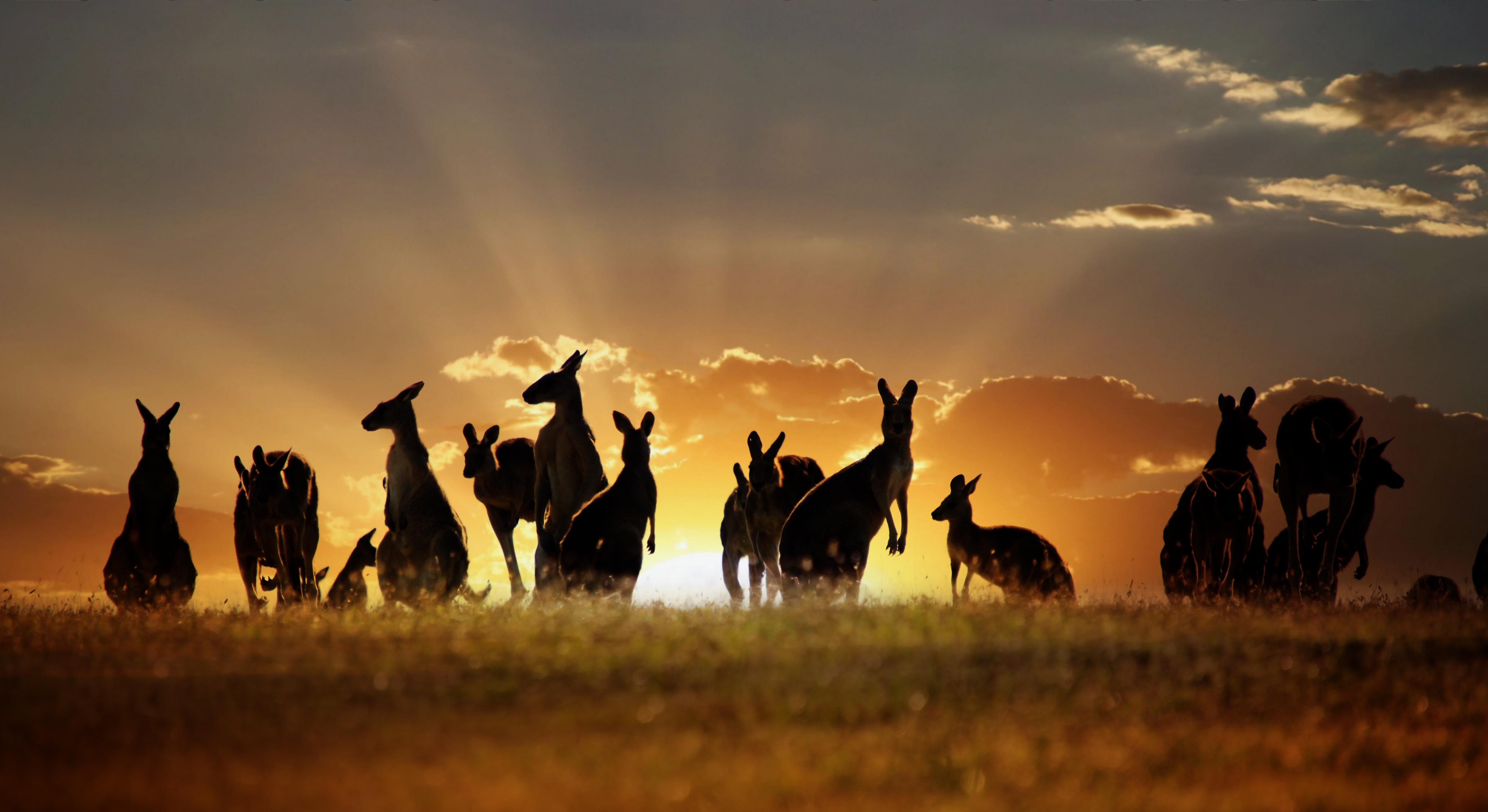 Australija AustraliaDay
