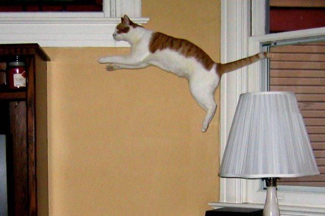 Lidojošie kaķi 2