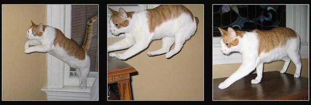 Lidojošie kaķi 3