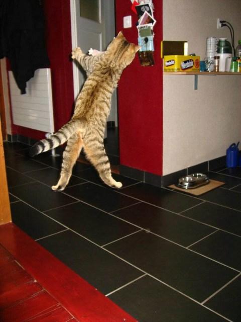 Lidojošie kaķi - Page 3 37