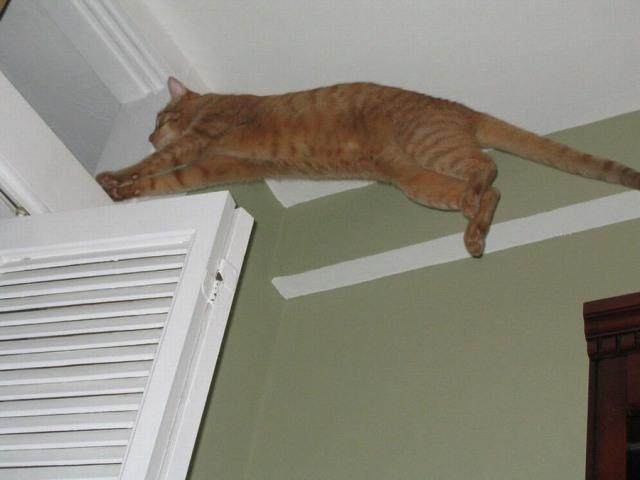 Lidojošie kaķi 4