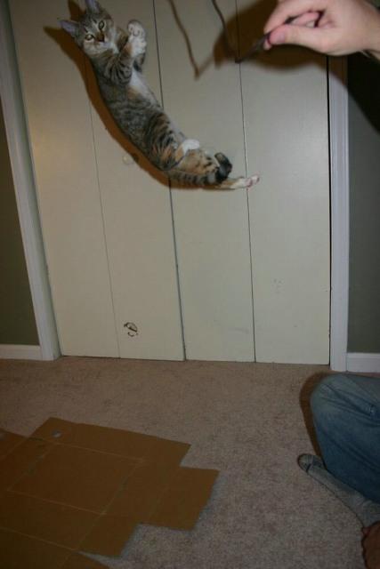 Lidojošie kaķi - Page 3 8
