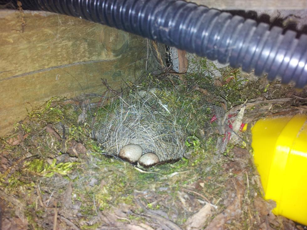 Lietderīga informācija par dzīvniekiem un putniem, online web kameras Ligzda-olas