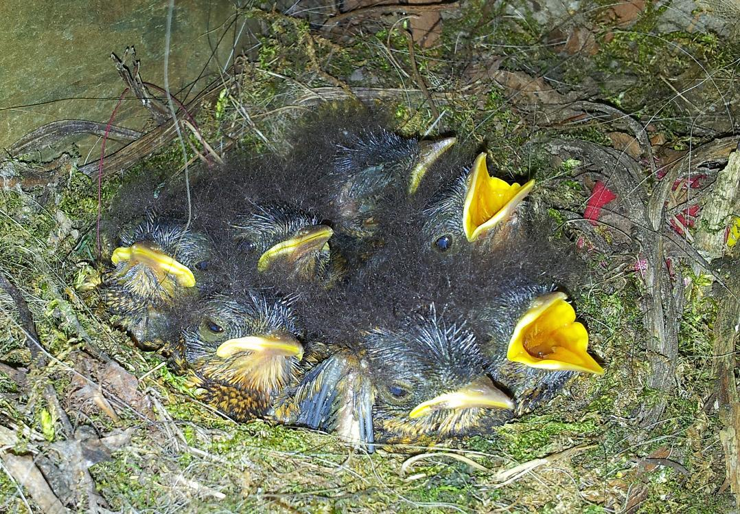 Mūsu pašu mazie draugi - Page 2 Piktie-putni