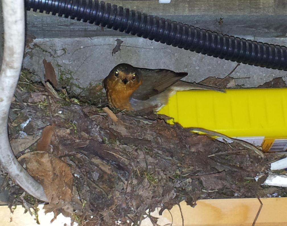 Lietderīga informācija par dzīvniekiem un putniem, online web kameras Kas-tas-par-putnu