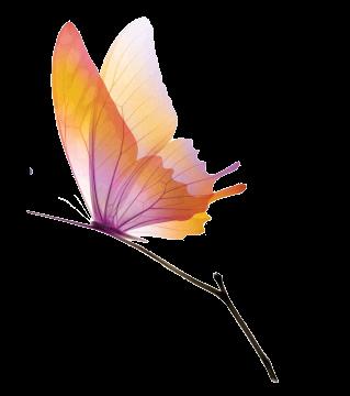 Vole Navane Vole papillon  3cx39l04