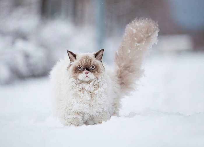 insolite !!  - Page 2 Animal-Neige-Hiver-04