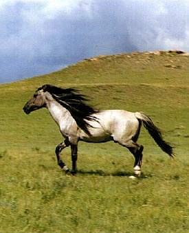Imagenes de caballos (cualquier estacion) Caballos-mustang3