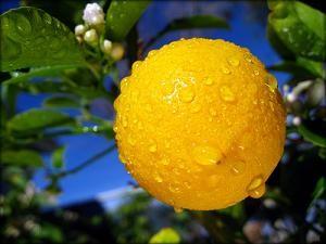 Crema - balsamo al limone per capelli normali e grassi 300a324af65e35b27bdfa4af2b301a1b
