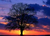 Le Soleil, mythes et légendes TreeSunset_sm