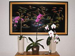 vos jardins  vos plantes - Page 24 TN_P9040017