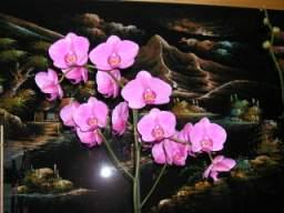 vos jardins  vos plantes - Page 24 TN_P9160061