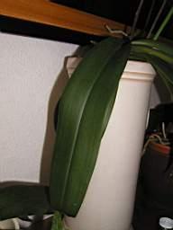 vos jardins  vos plantes - Page 24 TN_P3220074