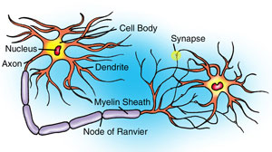 Neurons, remarkable evidence of design 248neuron