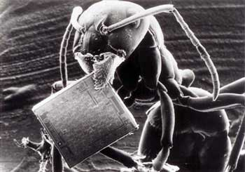 Shannon's Theory of Information 7637-ant-microchip