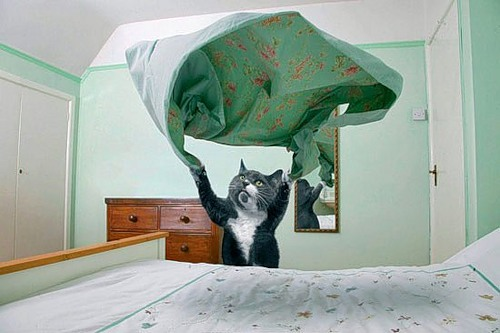 Como perros y gatos. Dream_cat_creativing.net_002