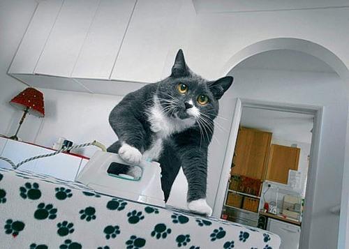 Como perros y gatos. Dream_cat_creativing.net_003