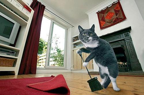 Como perros y gatos. Dream_cat_creativing.net_006