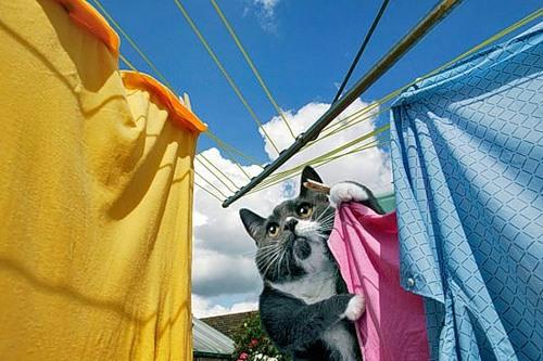 Como perros y gatos. Dream_cat_creativing.net_009