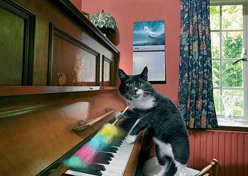 Como perros y gatos. Dream_cat_creativing.net_010