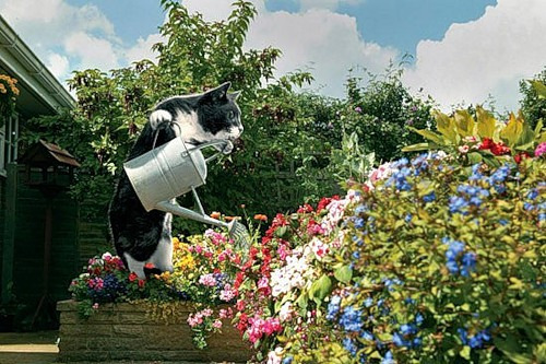 Como perros y gatos. Dream_cat_creativing.net_011