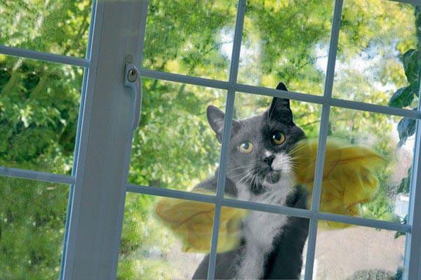 Como perros y gatos. Dream_cat_creativing.net_012