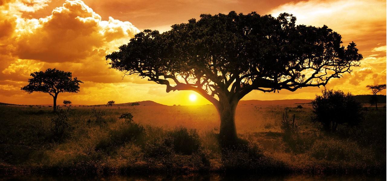 Beaux Jardins  - Jardins de Monet - Jardins de la Villa Taranto - Jardins de Butchart - ect African-sunset-savanna