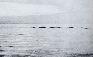 Brand new Ogopogo sighting surfaces OgoPogo-300x184