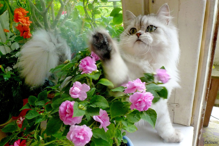 коты и цветы - Страница 2 1379151857_1885743773