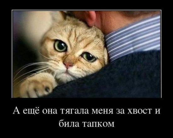 Котоматриця!)))) - Страница 9 X_7aad4dc2