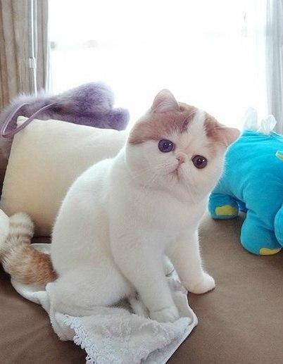 Самый милый кот на свете - Страница 2 SpFumz0FBUc