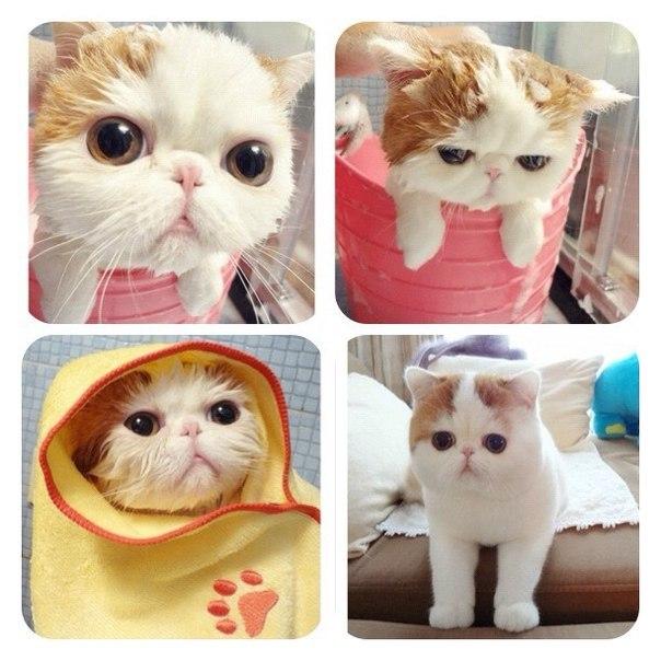 Самый милый кот на свете - Страница 2 YEqy6dkKWAo