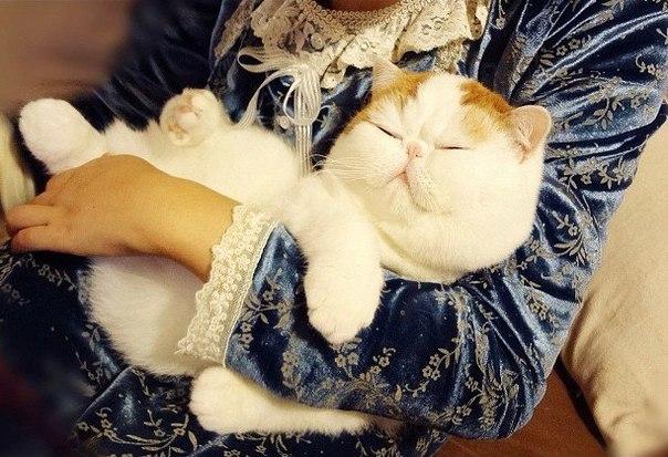 Самый милый кот на свете XOOy26RiNeI